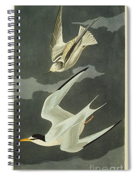 Little Tern Spiral Notebook