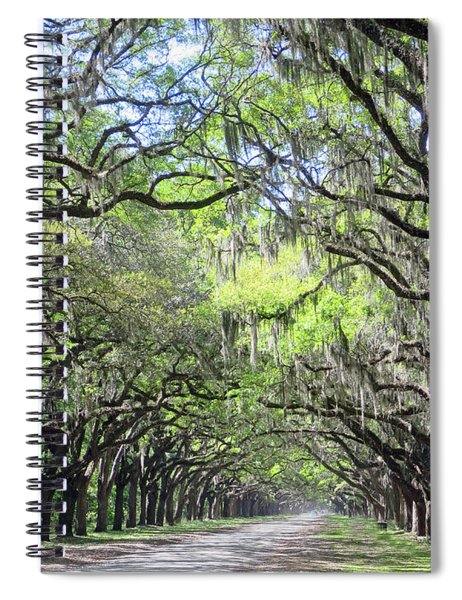 Live Oak Canopy Spiral Notebook