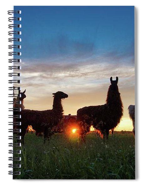 Llamas At Sunset Spiral Notebook