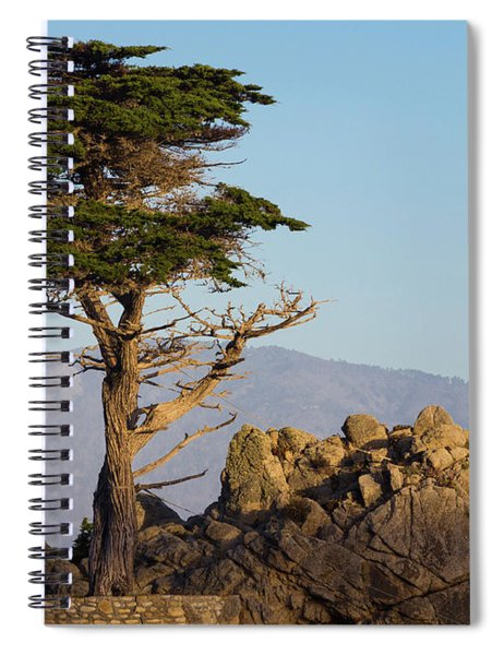 Lone Cypress Tree  Spiral Notebook