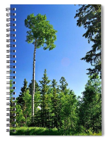 Lone Aspen Spiral Notebook