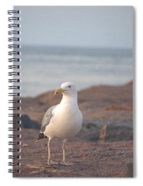 Lone Gull Spiral Notebook