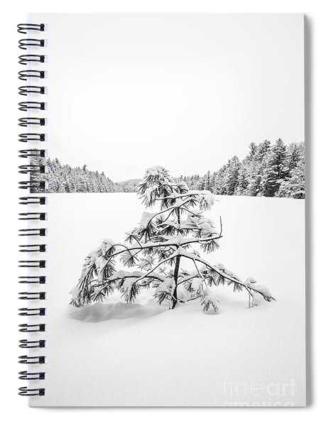 Lone Pine Tree Anderson Pond Eastman New Hampshire Spiral Notebook