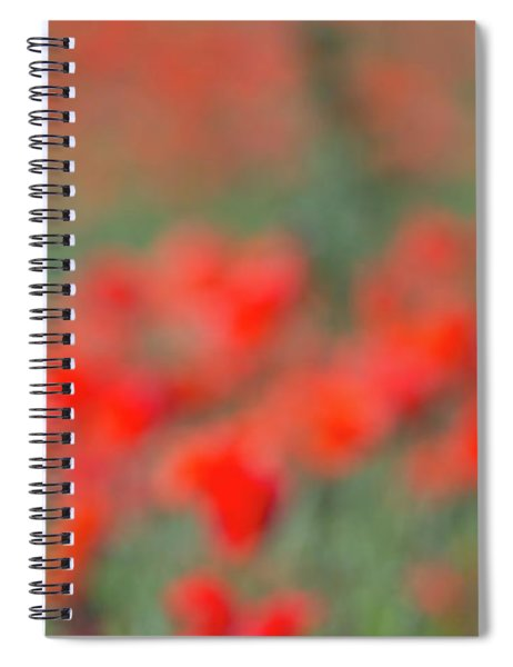 Lone Poppy Clarity Spiral Notebook