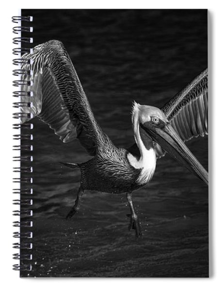 Lone Pelican In Flight - Black And White Spiral Notebook