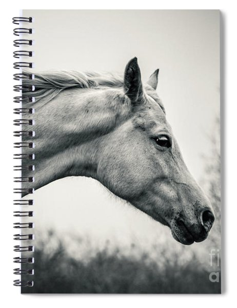 Lonely White Horse Against The Wind Spiral Notebook