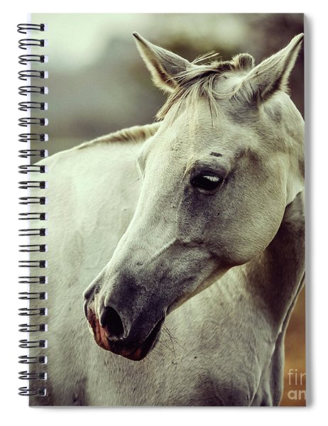 White Horse Close Up Vintage Colors Portrait Spiral Notebook