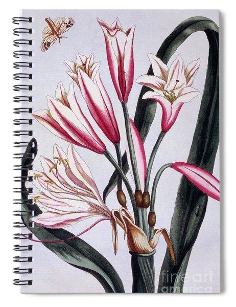 Long Leaved Amaryllis Spiral Notebook