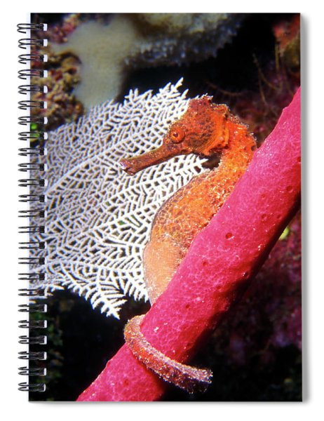 Longsnout Seahorse, Roatan, Honduras Spiral Notebook