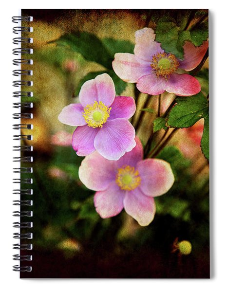 Looking For The Light Spiral Notebook