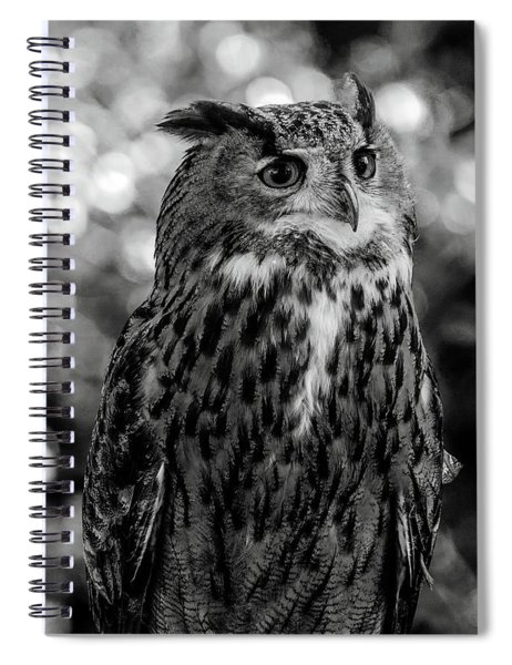 Looking Owl  Spiral Notebook