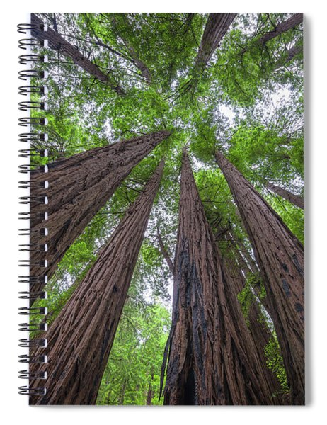 Looking Up Redwood Trees Spiral Notebook