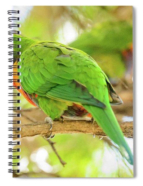 Lorrikeets 02 Spiral Notebook