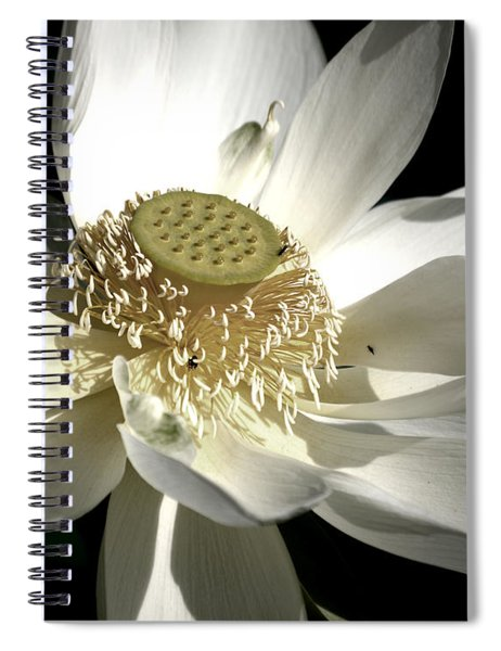 Spiral Notebook featuring the photograph Lotus 8514ds by Brian Gryphon