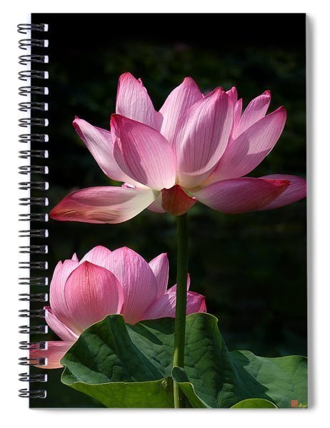 Lotus Beauties--upstaged Dl048 Spiral Notebook
