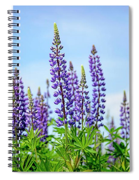 Lupines And Blue Sky Spiral Notebook