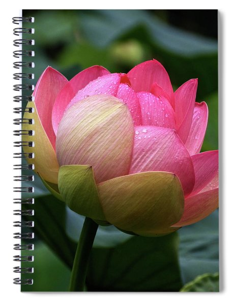 Luscious Lotus With Raindrops Spiral Notebook
