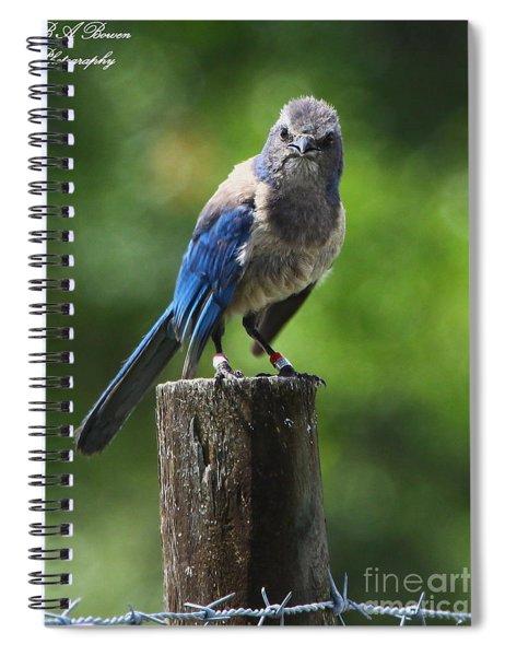 Mad Bird Spiral Notebook