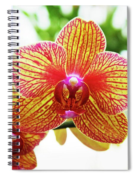 Magenta And Yellow Orchids - Close Up Against Blurred Background Spiral Notebook