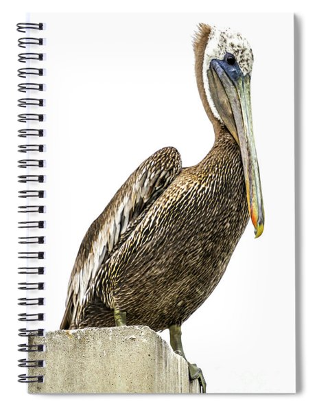 Majestic Gulf Shores Pelican 1071a Spiral Notebook