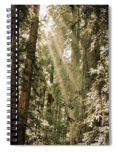 Magical Forest 2 Spiral Notebook