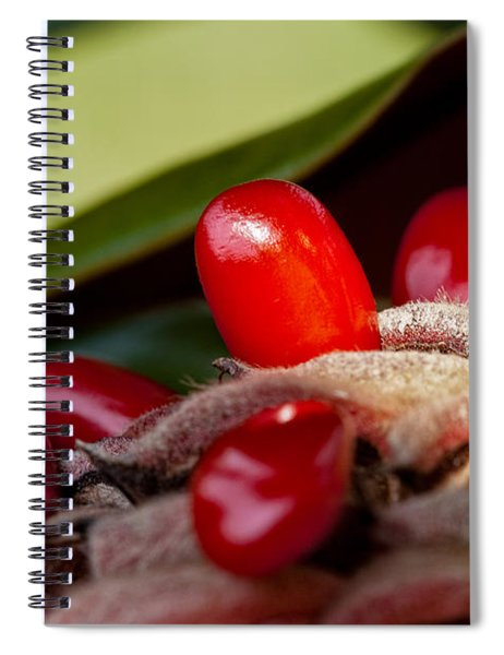Magnolia Seeds Spiral Notebook