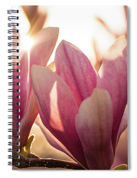 Magnolias At Sunset Spiral Notebook