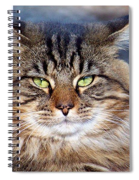 Maine Coon I Spiral Notebook