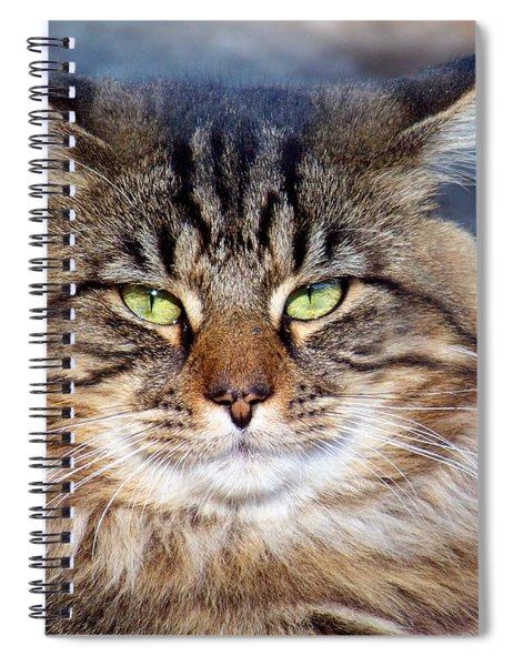 Maine Coon I Spiral Notebook