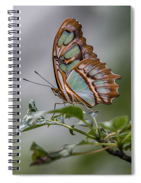 Spiral Notebook featuring the photograph Malachite Butterfly Profile by Patti Deters