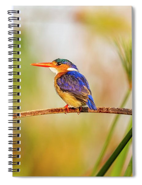 Malachite Kingfisher Hunting Spiral Notebook