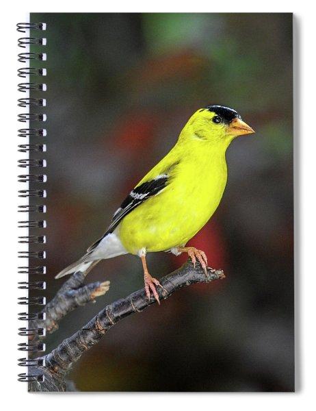 Male American Gold Finch Profile Spiral Notebook