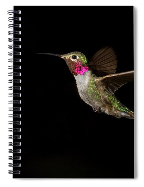 Male Broad-tailed Hummingbird Spiral Notebook