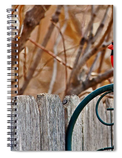 Spiral Notebook featuring the photograph Male Cardinal by Edward Peterson