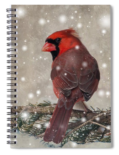 Male Cardinal In Snow #1 Spiral Notebook