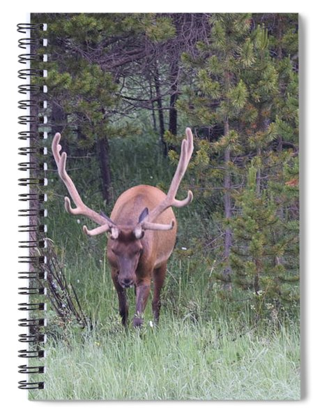 Bull Elk Rmnp Co Spiral Notebook