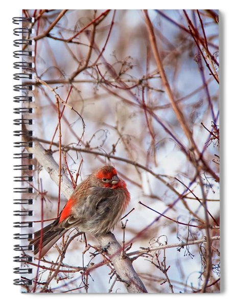 Male House Finch Holds In The Heat Spiral Notebook