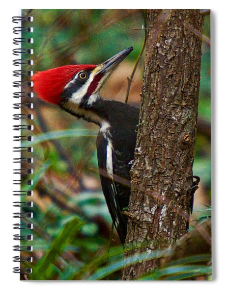 Male Pileated Woodpecker Spiral Notebook