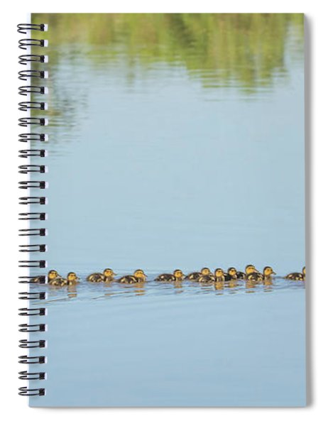 Mallard Chicks And Adult 7293-042518-1cr Spiral Notebook