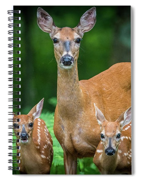 Mama And Fawns Spiral Notebook
