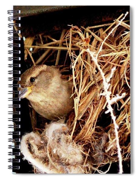 Mama Bird Spiral Notebook