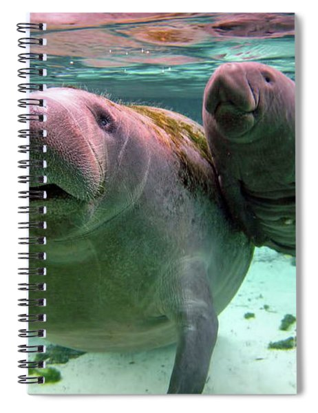 Manatee Mom And Calf Spiral Notebook
