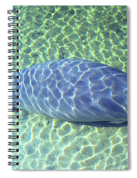 Manatee Spiral Notebook