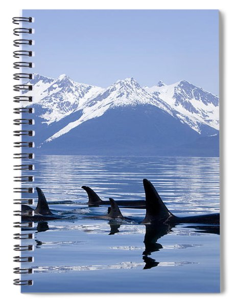 Many Orca Whales Spiral Notebook