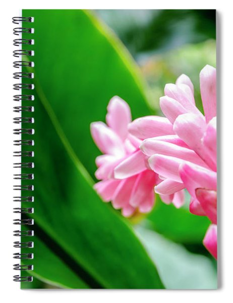 Many Pink Petals Spiral Notebook