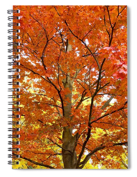 Maple Mania 22 Spiral Notebook