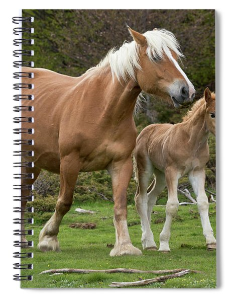 Mare And Foal In France Spiral Notebook