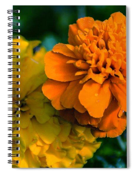 Marigold 1 Spiral Notebook