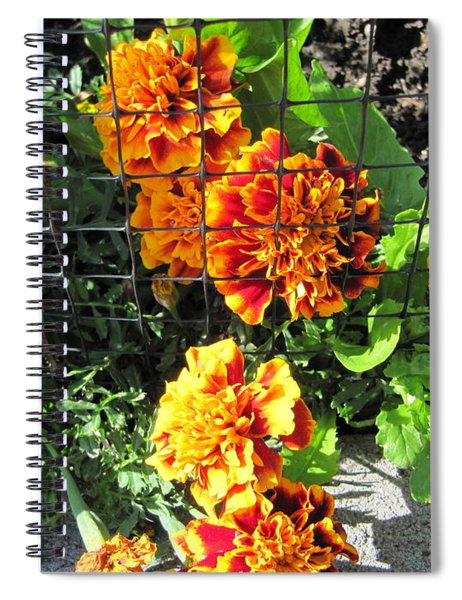 Marigolds In Prison Spiral Notebook