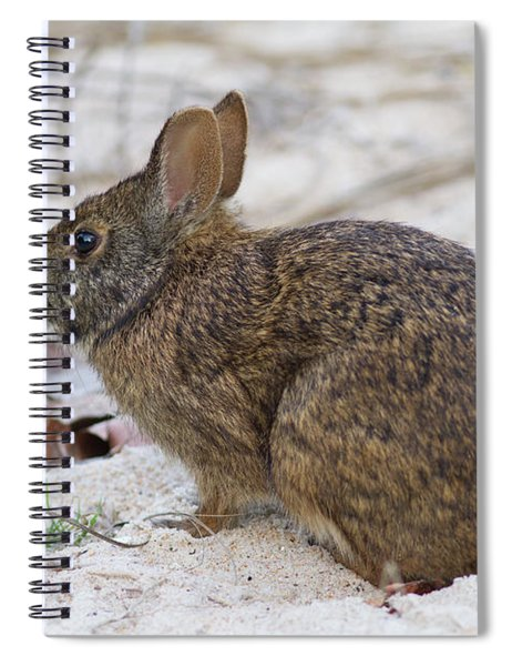 Marsh Rabbit On Dune Spiral Notebook